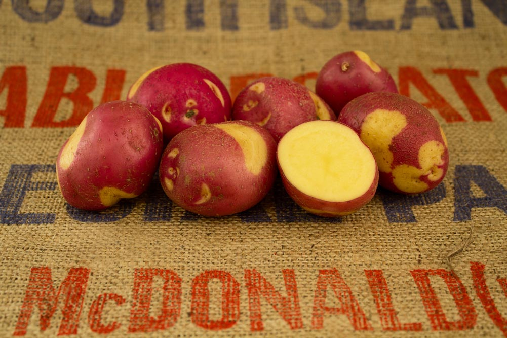 Apache potato variety