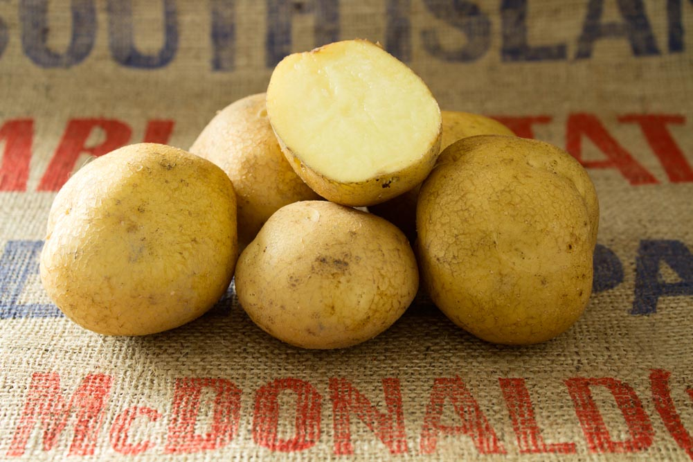 Caruso potato variety