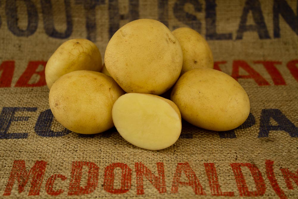 Casablanca potato variety