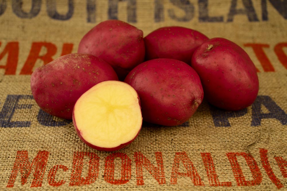 Crop 55 potato variety