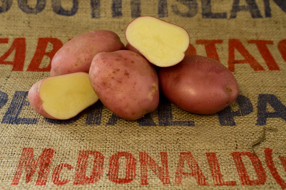 Desiree potato variety