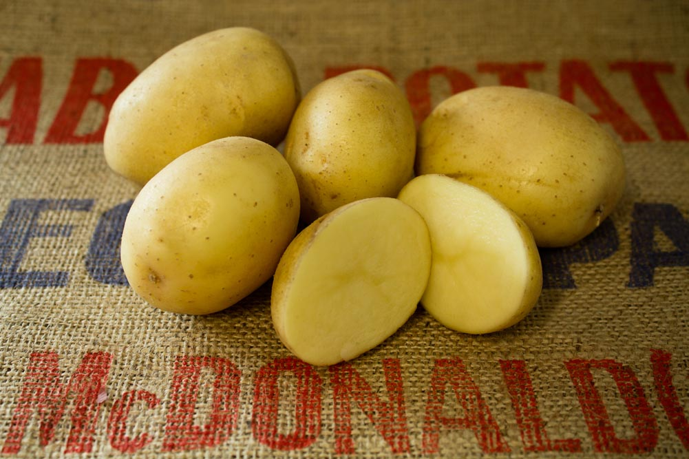 Frisia potato variety