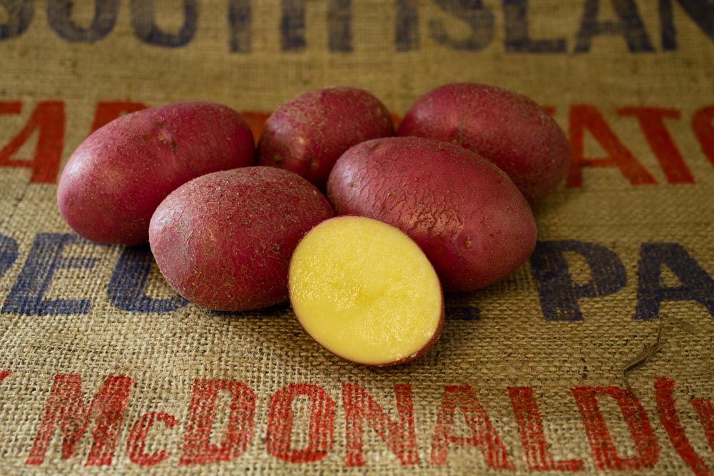 Labella potato variety