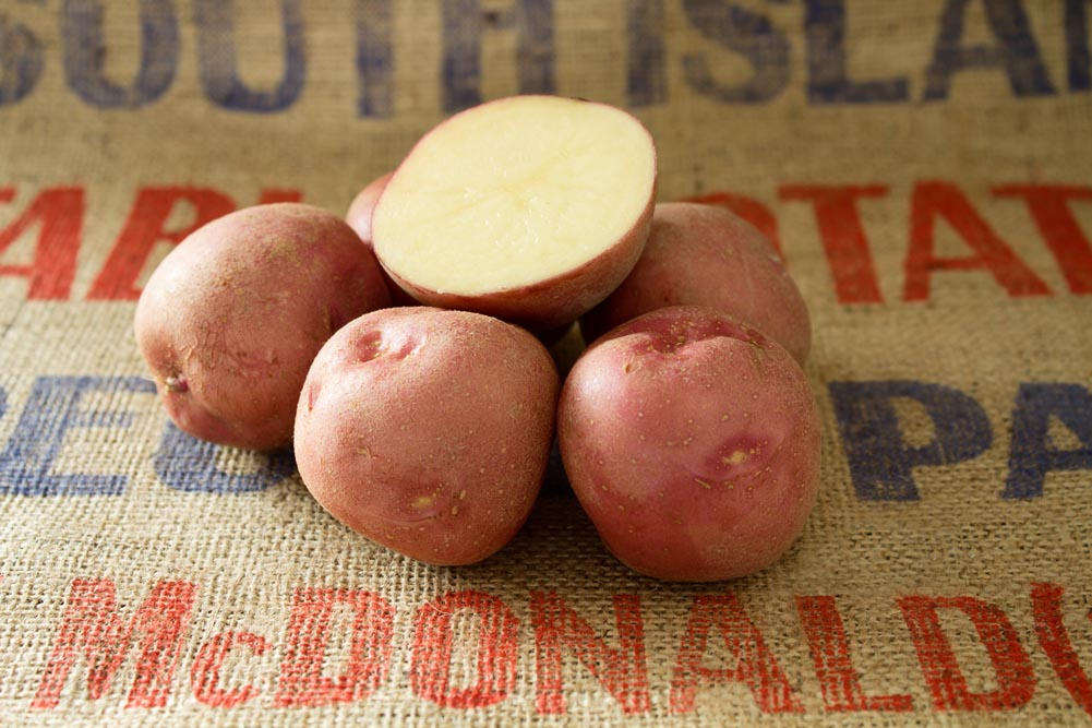 Lady Rosetta potato variety