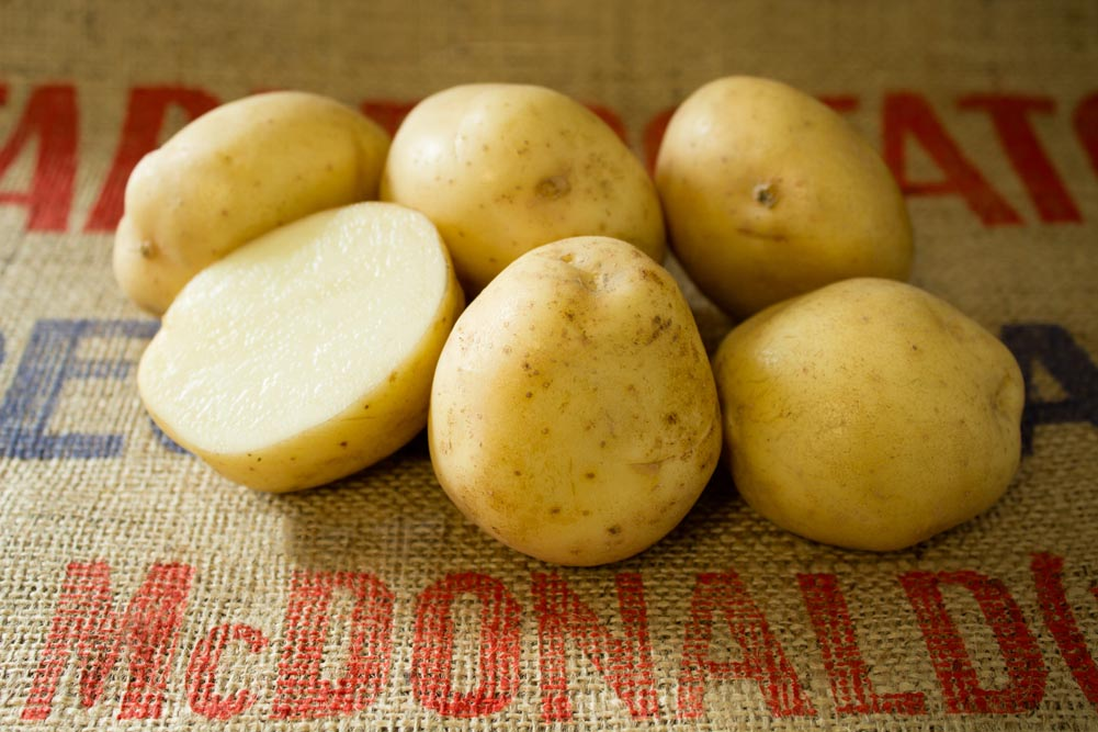 Maris Anchor potato variety