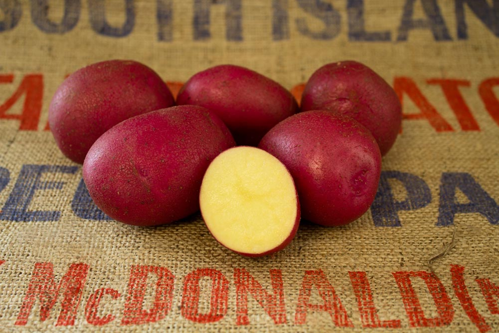 Romanze potato variety