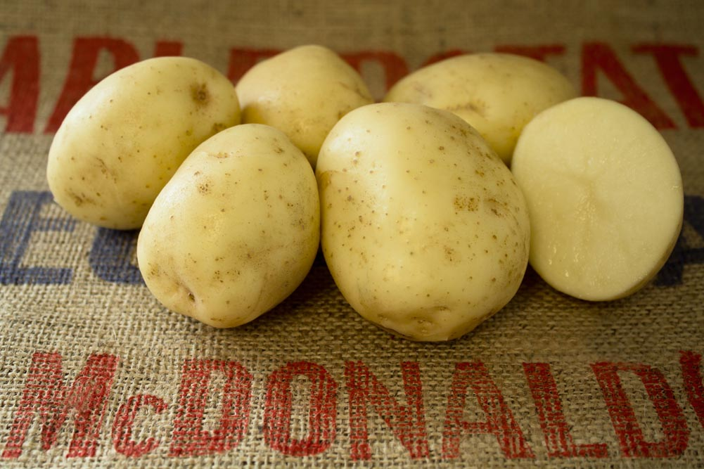 Sebago potato variety