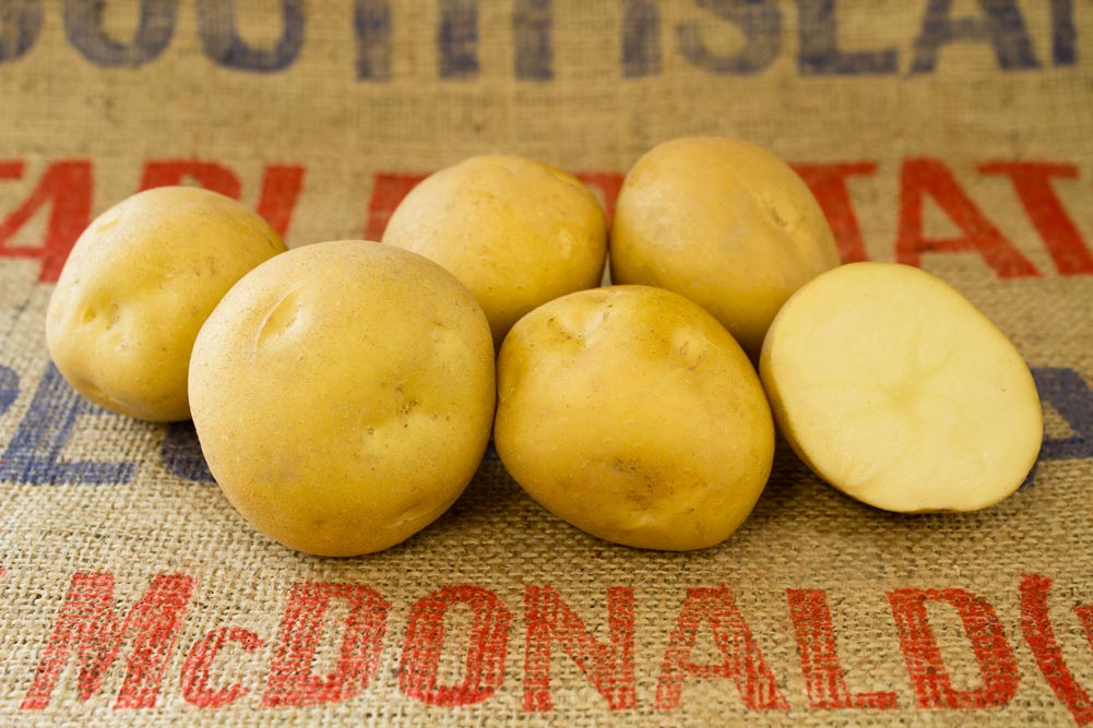 Snowden potato variety