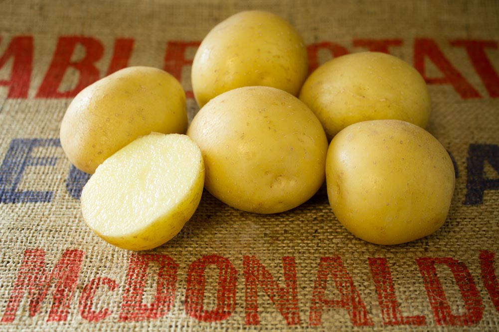 Swift potato variety