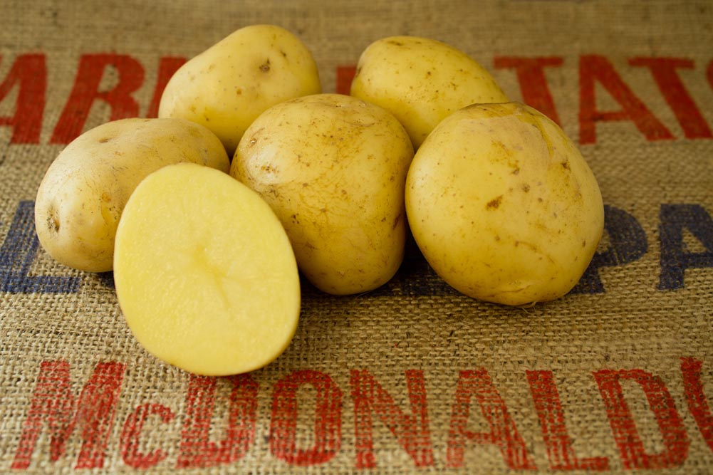 Taurus potato variety