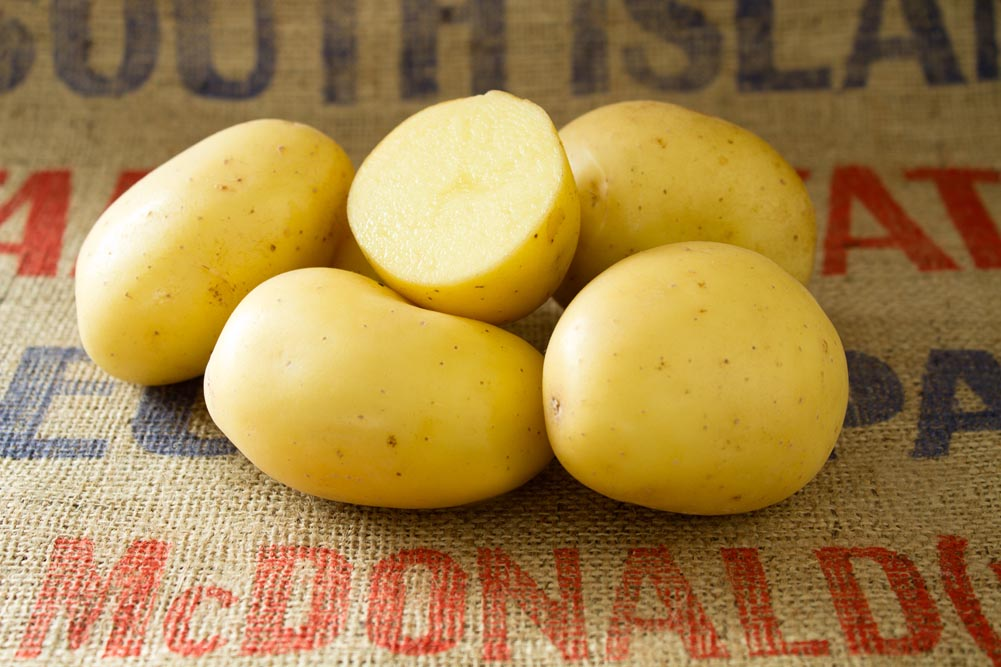 Vivaldi potato variety